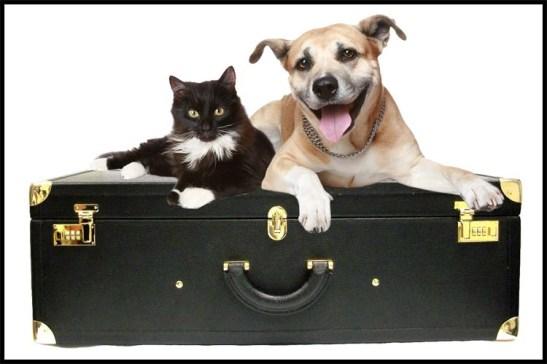 viagem-segura-com-animais-de-estimacao-5